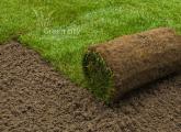 რულონური ბალახი - გამწვანება - გაზონი